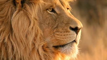 Lion SA