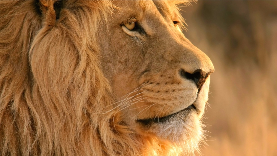 Lions killed in South Africansanctuary