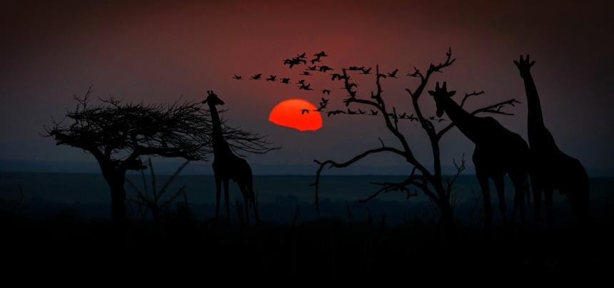 africa-2785836_1280