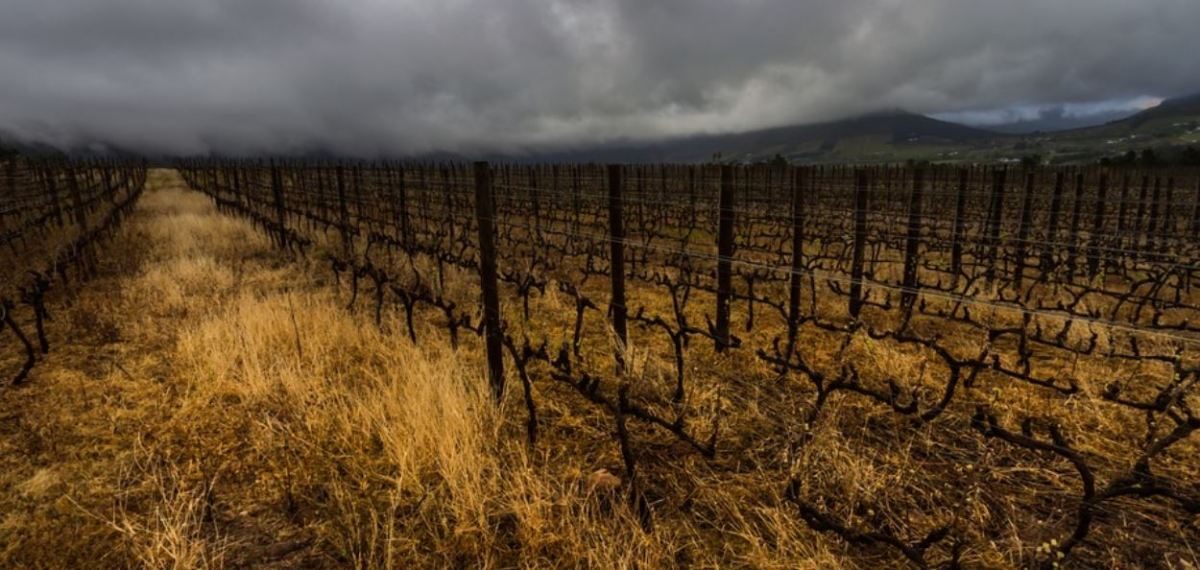 South African wine producers at risk caused by drought