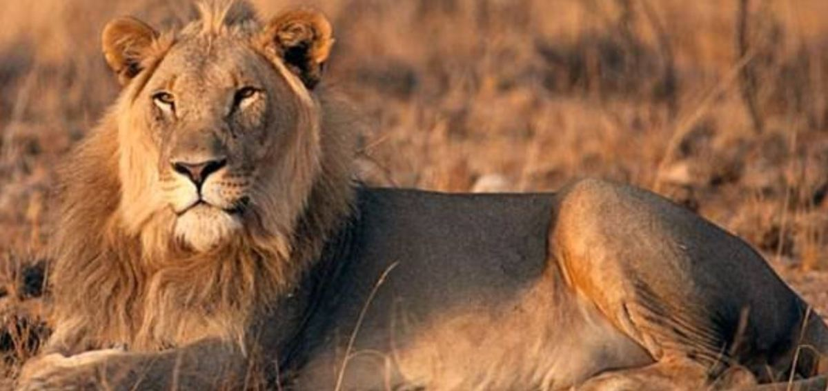 Namibia in search of  Human-Wildlife Conflict resolution