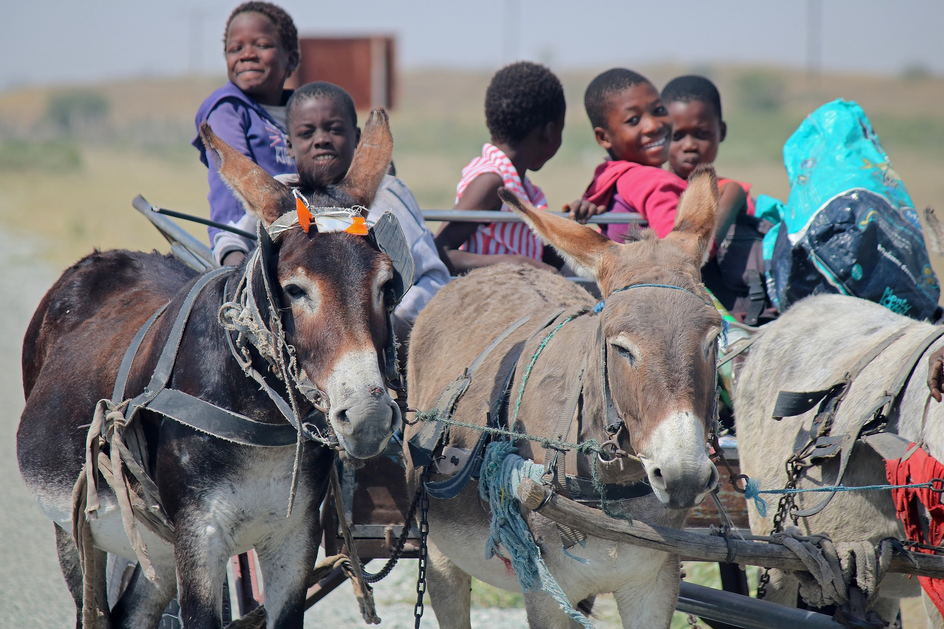 donkey-cart-3761203_1920