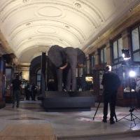 Belgium Africa Museum opening