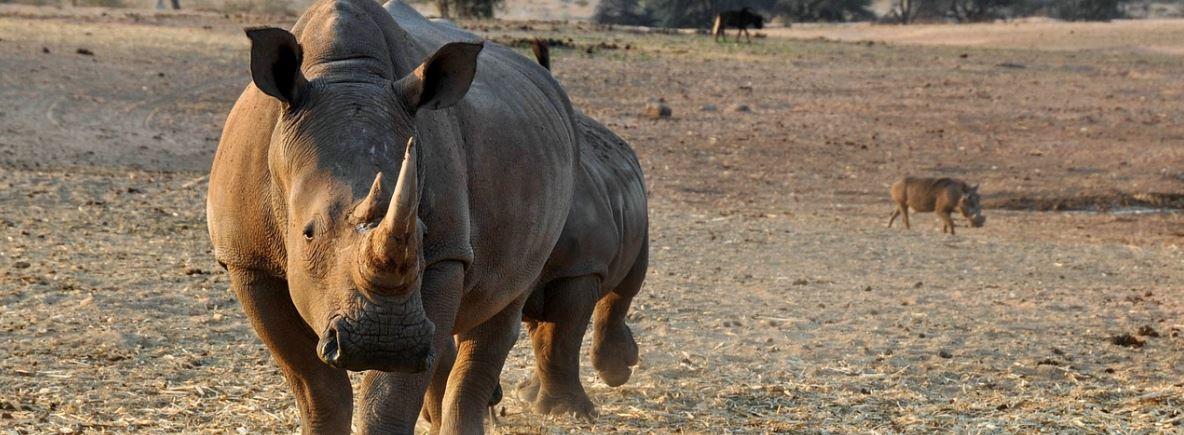 Tanzania elephant & rhino populations recover