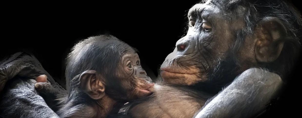 Gorilla Day Kwita Izina